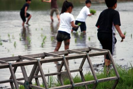 2009年5月 井村さんの有機の田んぼで田植え体験