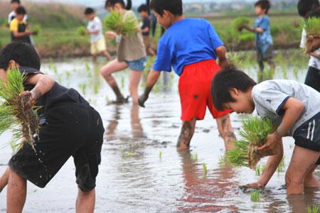 2009年5月 井村さんの有機の田んぼにたくさんの子供たち