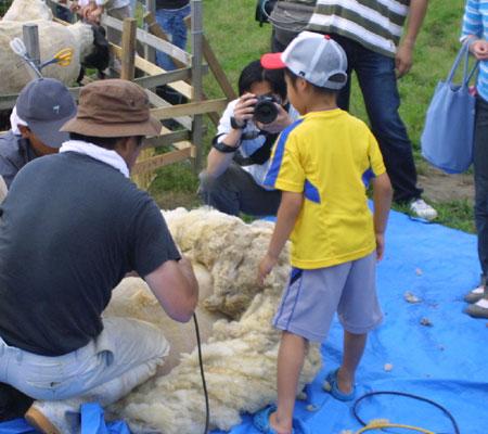 2008年の羊の毛刈りイベント